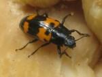 More Bugs This Week