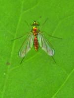 Maverick Elton, Backyard Naturalist: Tomato Plant Edition