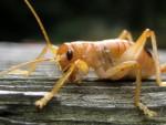 Grasshopper??