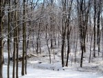 Stopping By the Woods On a Snowy Evening. Well. Midmorning, Actually.