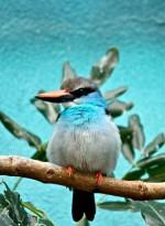 Philadelphia Zoo Pt. 2: McNeil Avian Center