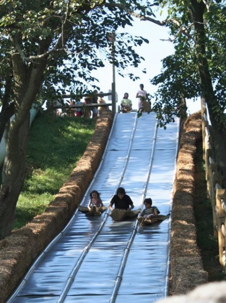 racing down giant slide at cherry crest adventure farm