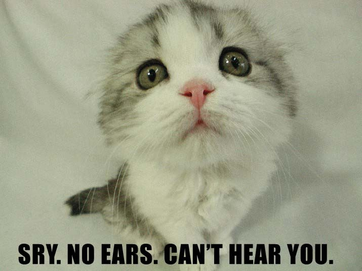 lolcat hear you