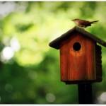 wren-birdhouse