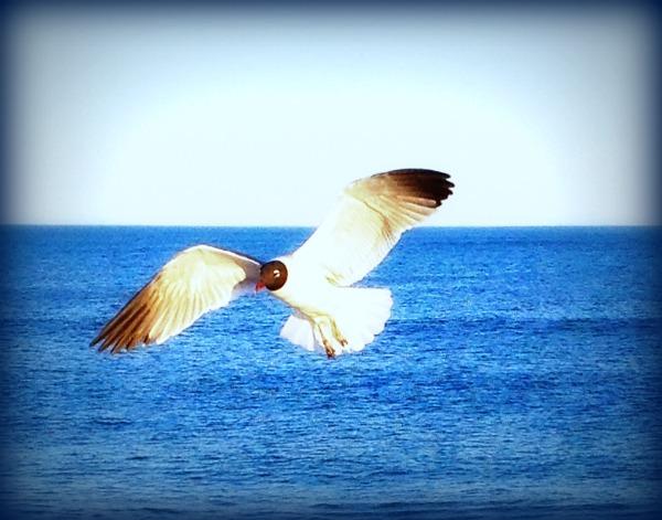 bird-solo2