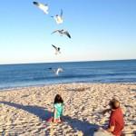birds_beach