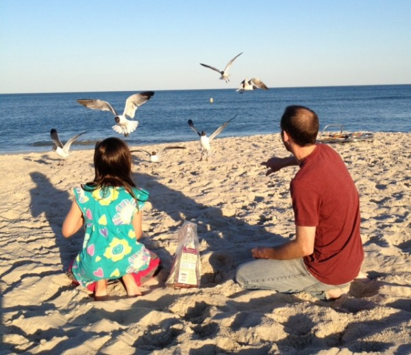feeding birds on beach