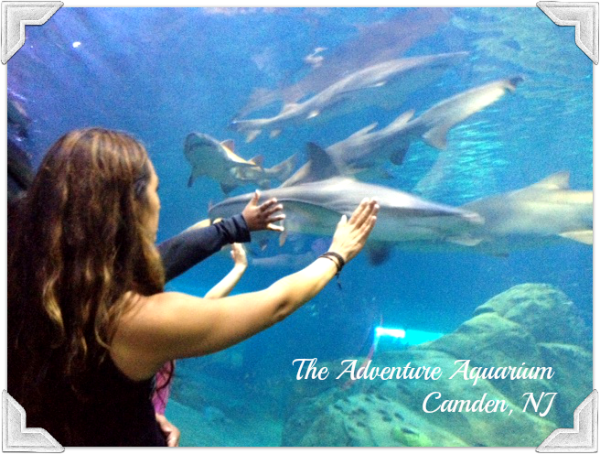 adventure aquarium nj Fostering a Love of Nature as a Family: The Adventure Aquarium