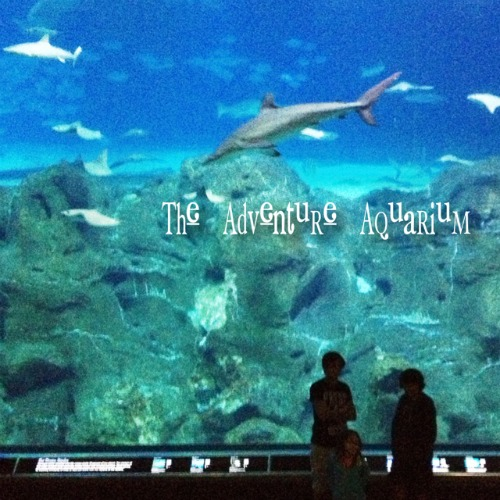 adventureaquarium Fostering a Love of Nature as a Family: The Adventure Aquarium