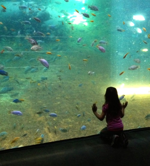 cass aquarium Fostering a Love of Nature as a Family: The Adventure Aquarium