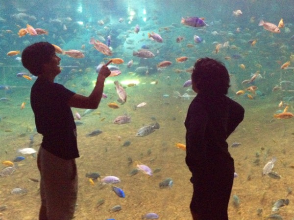 jake mav aquarium Fostering a Love of Nature as a Family: The Adventure Aquarium