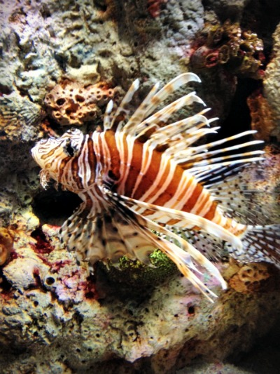 lionfish Fostering a Love of Nature as a Family: The Adventure Aquarium