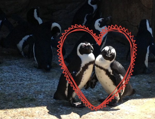love penguins Fostering a Love of Nature as a Family: The Adventure Aquarium