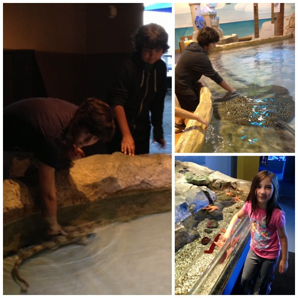petting aquarium 600x600 Fostering a Love of Nature as a Family: The Adventure Aquarium