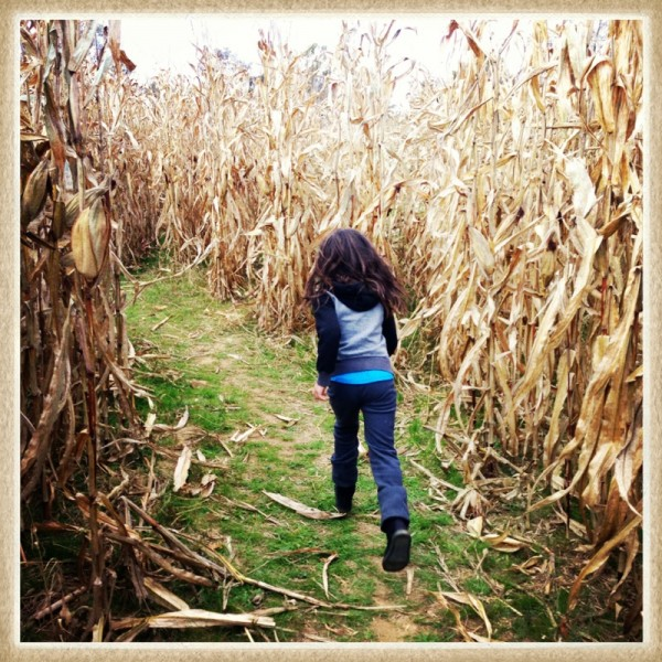 corn maze 600x600 Move in the Direction of Your Dreams.