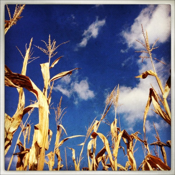 corn sky 600x600 Move in the Direction of Your Dreams.