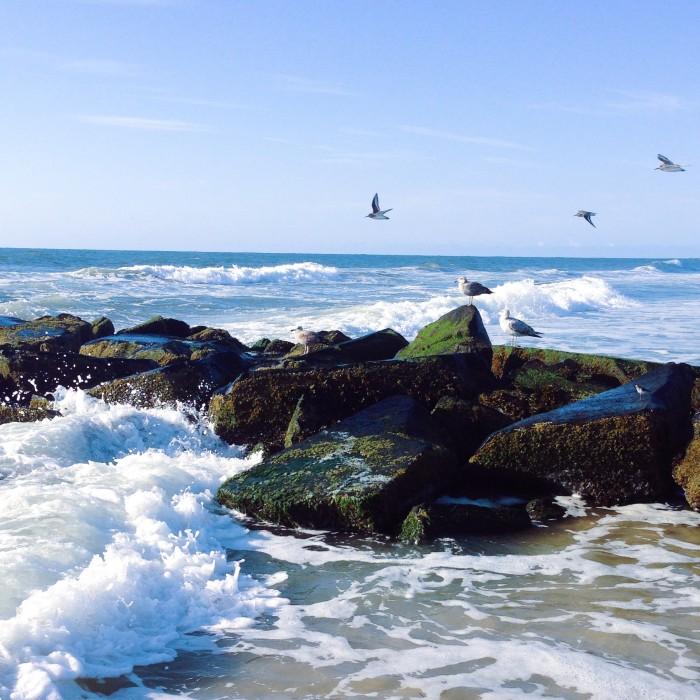 gulls on beach jetty