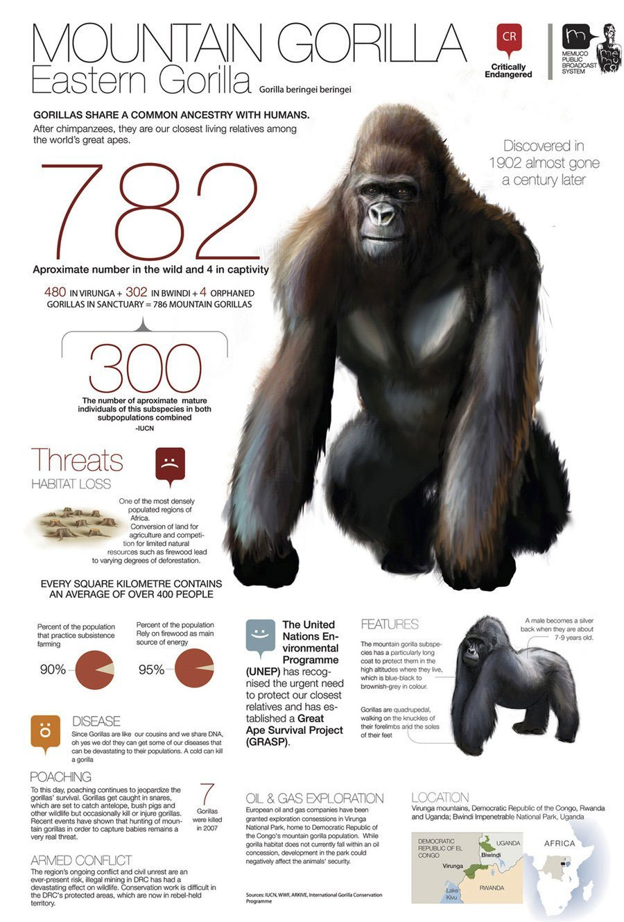 gorilla infographic