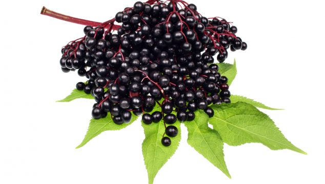 Let's Talk About Elderberry for Cold and Flu